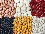 Beans - фото 2
