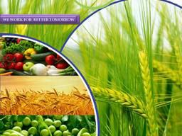 Növényvédő szer gyártója és szállítója világszerte