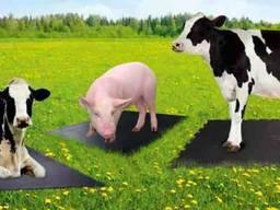 The rubber coating (mats for farm livestock)